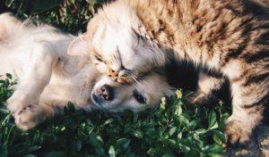 Insurance Navy Auto Insurance24 Common Household Items Harmful To Pets Thumbnail