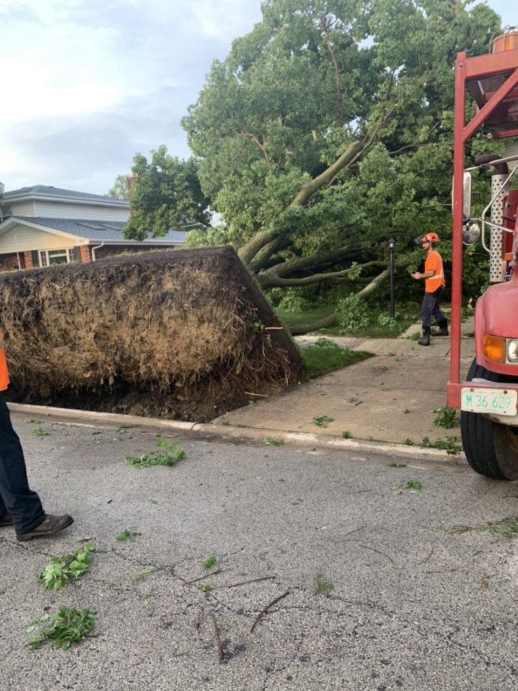 Trees falling over is just one example of what storm damage can do to your property.
